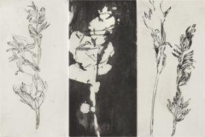 1800-fragments-botaniques-pic-300x201