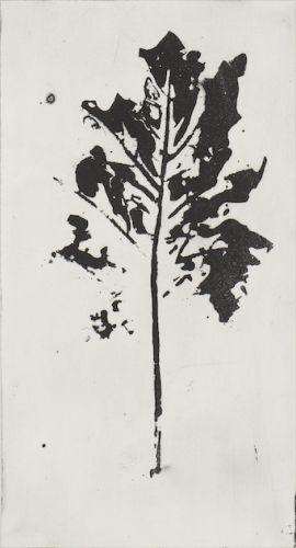 1806-fragments-botaniques-acanthe_aba4997-1