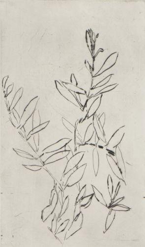 1809_aba4994-olivier-1